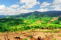 Vista scenica delle montagne stupefacenti e delle risaie verde intenso Fotografia Stock Libera da Diritti