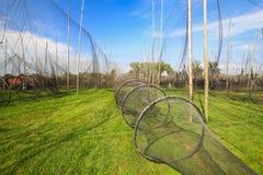 Vista scenica delle reti da pesca Immagine Stock Libera da Diritti
