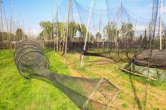 Vista scenica delle reti da pesca Immagini Stock Libere da Diritti