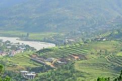 Vista scenica delle risaie a terrazze in Punakha Fotografia Stock Libera da Diritti