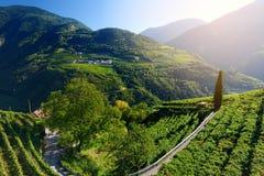 Vista scenica delle vigne e dei orachards di melo nella regione di Trentino-Alto Adige di Tirolo del sud, Italia Immagine Stock Libera da Diritti