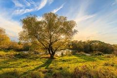 Vista scenica di bello tramonto sopra il fiume all'autunno Fotografia Stock Libera da Diritti