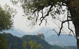 Vista scenica di Julian Alps e del castello Bled, rami dell'albero, giorno soleggiato, sanguinato, Slovenia immagine stock libera da diritti