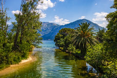 Vista scenica - palme e mare del fiume Fotografia Stock Libera da Diritti