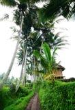 Vista scenica rurale del Bali con la capanna del coltivatore Fotografia Stock