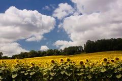 Vista scenica sul paesaggio agricolo di estate Fotografia Stock