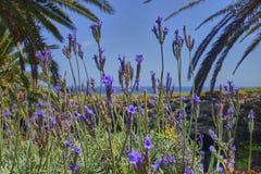 Vista scenica sull'isola di Lanzarote nell'Oceano Atlantico immagini stock libere da diritti