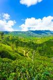 Vista scenica V della piantagione di tè dell'alpeggio di Haputale Immagine Stock