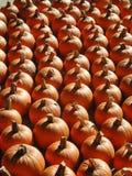 Vista a schermo pieno delle zucche allineate per la vendita fotografie stock