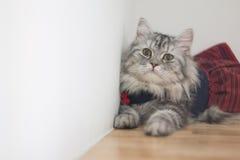 Vista seus gatos bonitos Imagens de Stock