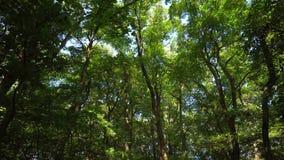 Vista sobre árvores e a câmera então móvel para baixo video estoque