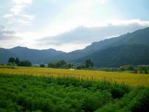 Vista sobre campos verdes às montanhas cobertas na floresta Imagens de Stock Royalty Free