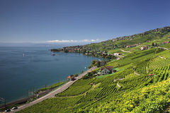 Vista sobre o lago Genebra das videiras de Lavaux Imagens de Stock Royalty Free