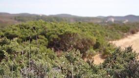 Vista sobre o país seco e empoeirado com arbustos e a paisagem do monte no fundo video estoque