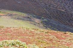 Vista sobre os vinhedos do la Geria, Lanzarote fotografia de stock royalty free