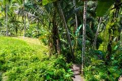 Vista sobre terraços do arroz de Tegallalang perto de Ubud, Bali, Indonésia Fotos de Stock Royalty Free