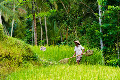 Vista sobre terraços do arroz de Tegallalang perto de Ubud, Bali, Indonésia Foto de Stock Royalty Free