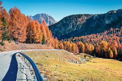 Vista soleggiata fantastica delle alpi della dolomia con gli alberi di pino strobo Immagine Stock