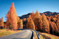 Vista soleggiata fantastica delle alpi della dolomia con gli alberi di pino strobo Fotografia Stock Libera da Diritti