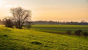 Vista sopra gli alberi e campi e prati nel sole uguagliante immagini stock