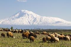 Vista sopra il monte Ararat dall'Armenia Immagine Stock
