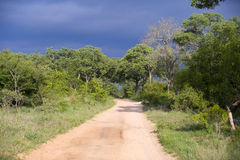 Vista sopra la sosta nazionale di Kruger Immagine Stock Libera da Diritti