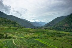 Vista sopra le risaie nel Bhutan Immagine Stock