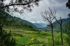 Vista sopra le risaie nel Bhutan Fotografia Stock Libera da Diritti