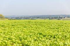 Vista sopra un campo di verdure Immagine Stock