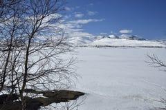Vista sopra un lago congelato con una betulla in priorità alta ed in una m. nevosa Immagini Stock