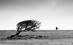 Vista stupefacente con l'albero della curvatura e la siluetta dell'uomo sull'orizzonte Fotografia Stock