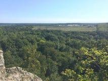 Vista stupefacente dall'interno della foresta profonda Immagini Stock