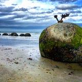 Vista stupefacente dei massi di Moeraki, costa Est, isola del sud, Nuova Zelanda Fotografia Stock