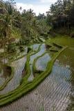 Vista stupefacente del campo del terrazzo del riso Fotografia Stock Libera da Diritti