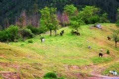 Vista stupefacente della molla con un piccolo villaggio in montagne di Rhodopi, Bulgaria Paesaggio magnifico, campi verdi, casett fotografia stock libera da diritti