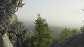 Vista stupefacente della natura della foresta verde della montagna e dell'albero solo che crescono su una roccia con il cielo com archivi video