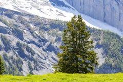 Vista stupefacente delle alpi e dei prati svizzeri vicino a Oeschinensee (lago Oeschinen), su Bernese Oberland, la Svizzera Fotografia Stock