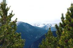 Vista stupefacente delle montagne nevose di inverno del paesaggio tramite i pini Fotografia Stock