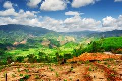Vista stupefacente delle montagne sceniche e delle risaie verde intenso Immagini Stock Libere da Diritti