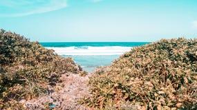 Vista stupefacente delle onde in Cali Immagine Stock Libera da Diritti