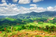 Vista stupefacente delle risaie verde intenso circondate dalle montagne Fotografia Stock
