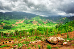 Vista stupefacente delle risaie verdi circondate dalle montagne sceniche Immagine Stock Libera da Diritti