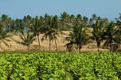 Vista stupefacente di cultura agrar in Lombok, Indonesia Fotografie Stock