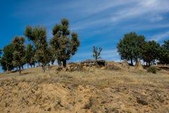 Vista stupefacente di paesaggio verde della montagna di Ograzhden Fotografie Stock