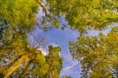 Vista su in Autumn Forest immagine stock libera da diritti