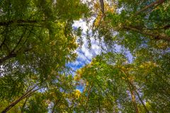 Vista su in Autumn Forest Fotografie Stock Libere da Diritti