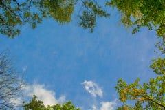 Vista su in Autumn Forest - cielo blu fotografia stock libera da diritti