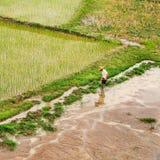 Vista su un lavoratore in un giacimento verde del riso, Hainan, Cina dell'angolo alto Immagine Stock Libera da Diritti