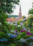 Vista su una chiesa a Zaandam dal villaggio Haaldersbroek Fotografia Stock