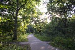 Vista su una pista ciclabile attraverso una foresta Fotografia Stock